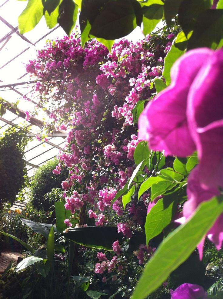 Flowers in a butterfly room ~