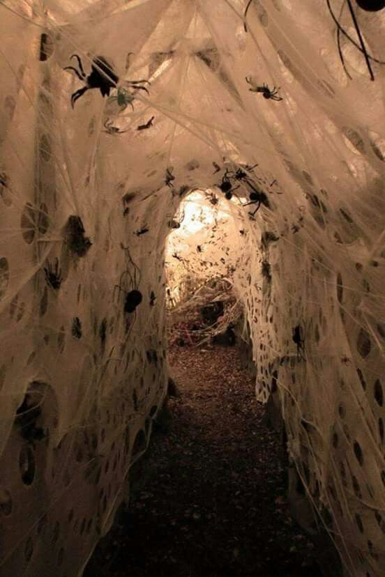 best 25 haunted trail ideas ideas on pinterest can dogs