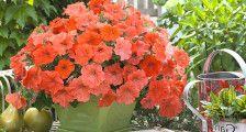 Сайт dom-v-sadu.ru с удовольствием подскажет, какие цветы посадить в тени для украшения вашего загородного участка. Цветы растущие в тени, даже самой глубокой 1. Примула