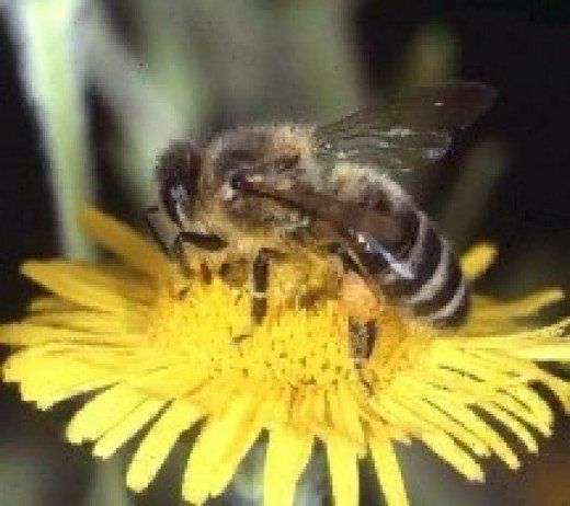 Please help stop the honey bee extinction.  The honey bee is paramount in the pollination of crops and responsible for many of the foods we eat that we take for granted.  Please help protect them.