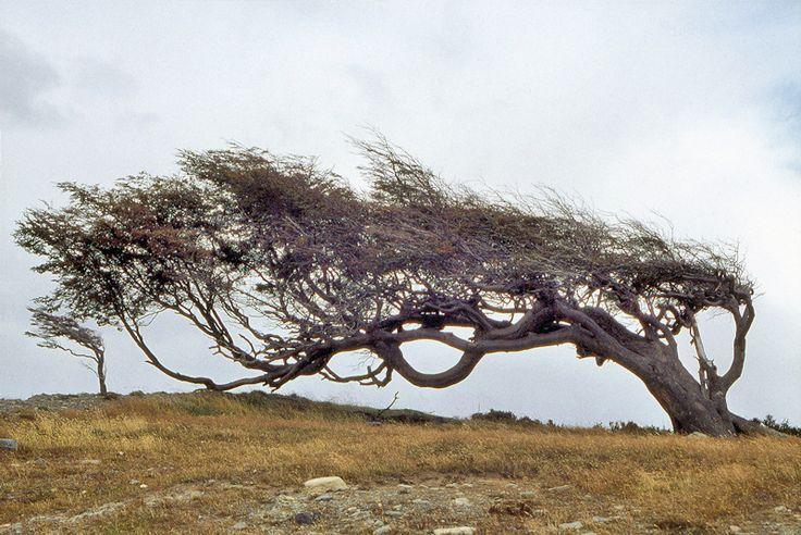 <3 <3 via Tierra del Fuego by frenchkriss