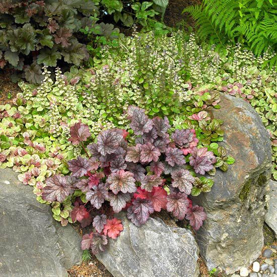 Pay attention to foliage texture, as well as color. Here, for example, purple heuchera makes a lovely contrast against 'Burgundy Glow' ajuga and gray-blue stones./