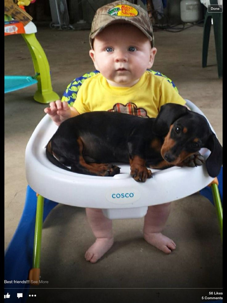 Odd place to lounge - Dachshund Dog and Baby