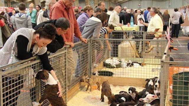 prohibit fairs and puppy puppies in pet shop