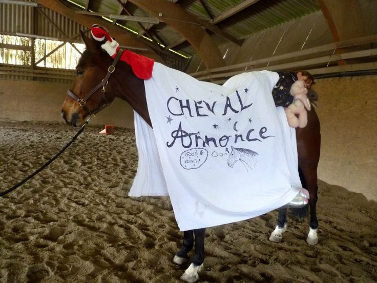 #cheval #ca #chevalannonce #concours