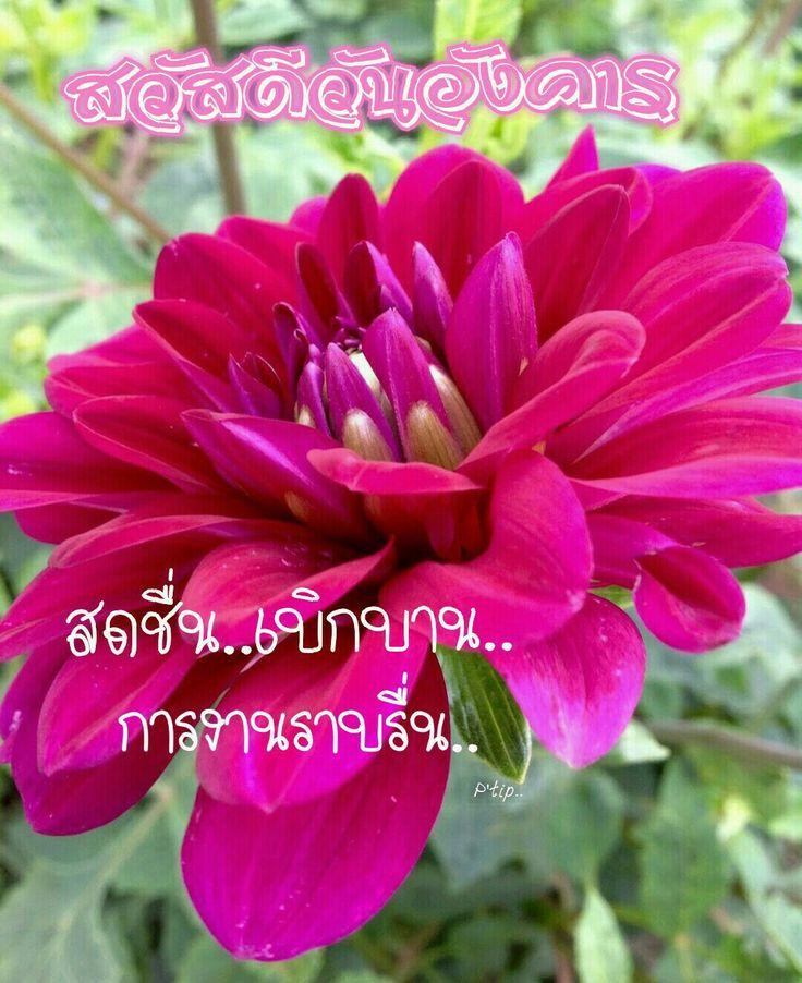 สว สด ว นอ งคาร ดอกไม ก หลาบส เหล อง ล ลล