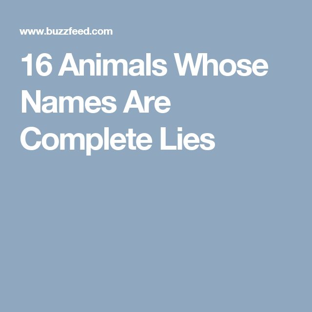 16 Animals Whose Names Are Complete Lies