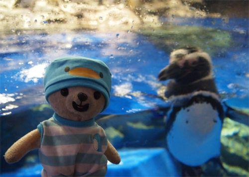 ペンギンコスでペンギンに会いに来た♪