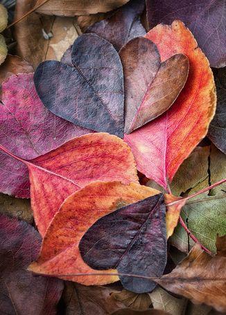 leaf hearts...