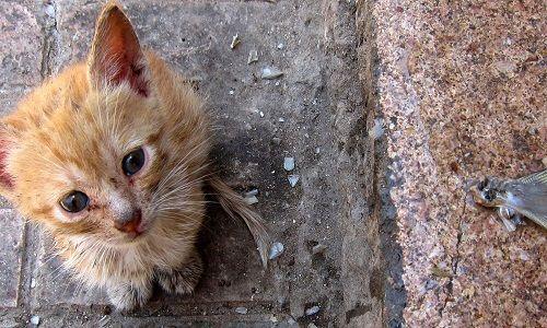 Pétition : Les chats errants
