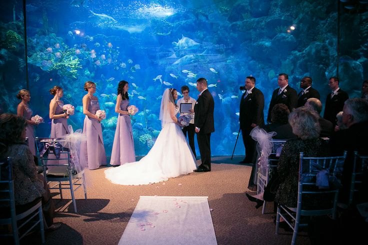 Cherished Ceremonies Weddings Tampa Wedding: 142 Best Images About Florida Aquarium Weddings On