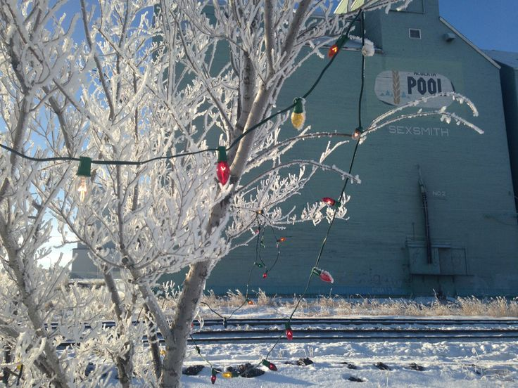 Christmas in Sexsmith