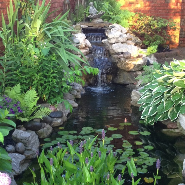 40 best images about cascading waterfalls on pinterest for Building a goldfish pond