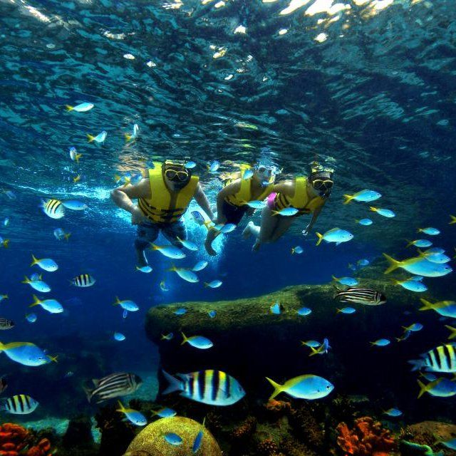 Experience the world's largest oceanarium for an affordable price in bustling, exotic Singapore.