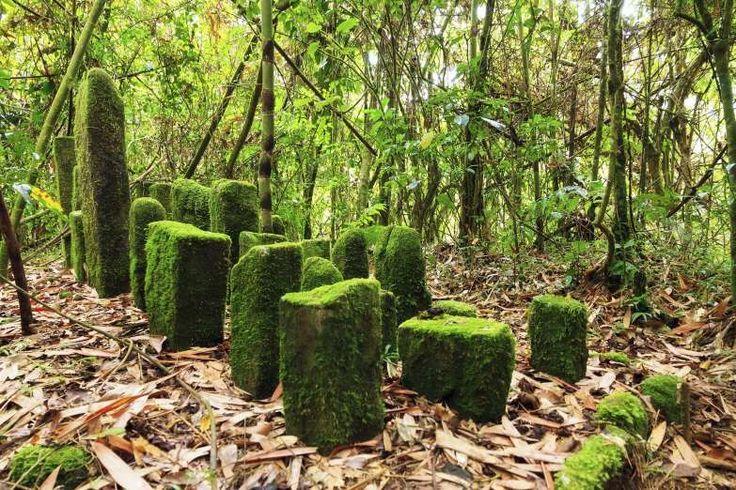 Madagascar - dennisvdw/Getty Images. MADAGASKAR Øen er verdens fjerde største og hjem for en af verdens mest frodige regnskove med et rigt dyreliv, der rummer både lemurer og desmerdyr. Men også her går det dårligt. Økosystemet er løbende blevet ødelagt af krybskytteri, skovrydning og afbrænding. Hvis der ikke gribes ind, forventes det, at regnskoven, og dens unikke indbyggere, er væk om bare 30 år.