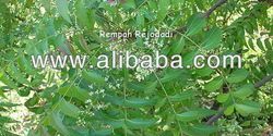 Azadirachta indica (Neem), an herb extensively used in Ayurveda, Unani and Homoeopathic systems of medicine to treat many health related problems and ailments, and also known to exert anticancer, antioxidant, wound-healing, and antimicrobial properties, is also known to be one of these plants from which almost every part is used, from the Neem oil extracted from its seeds to the leaves and branches, to say the least neem benefits extend to various lines of health.