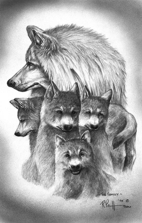 Tundra Wolf Family Bobs Black And White Drawing And Search
