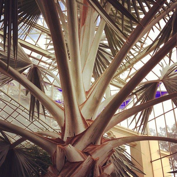 Adelaide Botanic Garden #seeaustralia