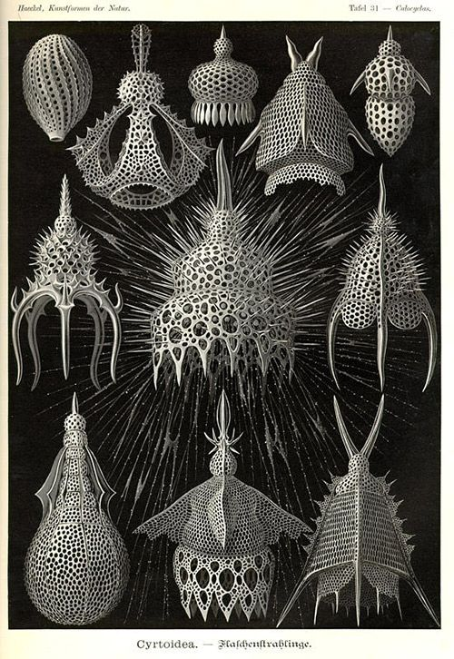 HAECKEL- TAKES-A- LOOK-AT- RADIOLARIA : parametric architectural design_ rené binet on haeckel