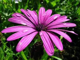 Resultado de imagen para plantas con flores para otoño invierno