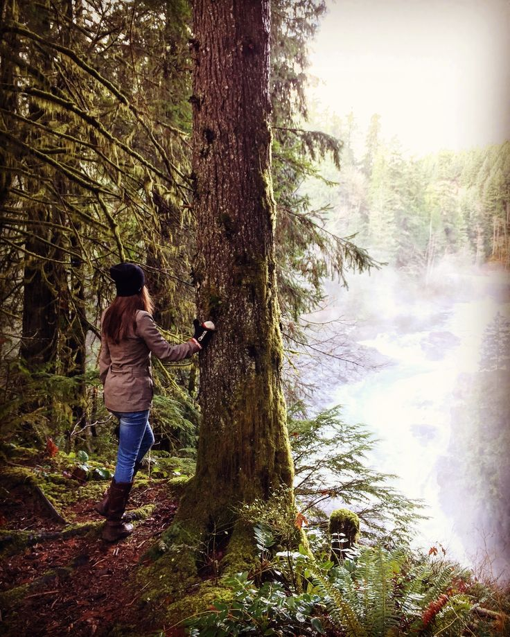 Vancouver island Elk Falls 🌟 Beautiful scenes, old growth forest,  and beautiful trails 💛