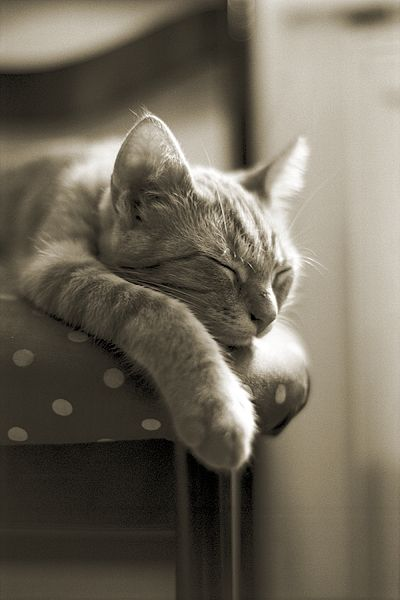 """""""There are people who reshape the world through force or argument, but the cat just lies there, dozing, and the world quietly reshapes itself to suit his comfort and convenience."""" --Allen and Ivy Dodd"""
