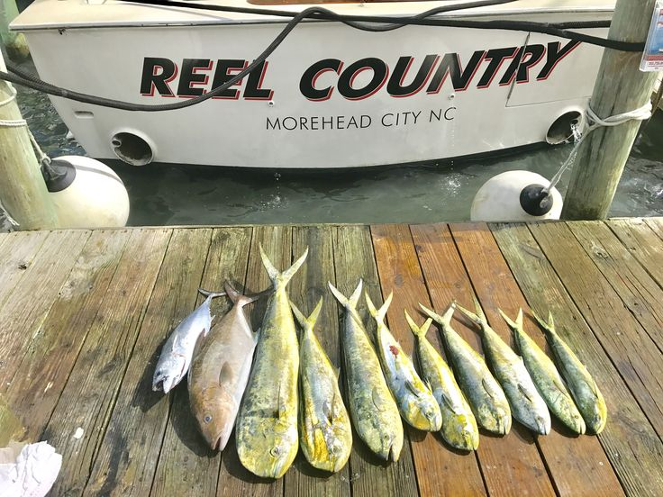 Reel Country Charter Fishing boat shows off their catch at the docks in Morehead City NC.