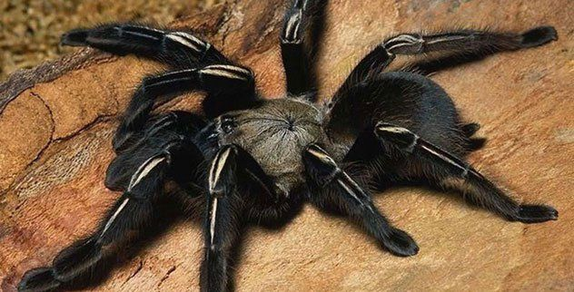 10 Animals You Wouldnt Believe People Eat