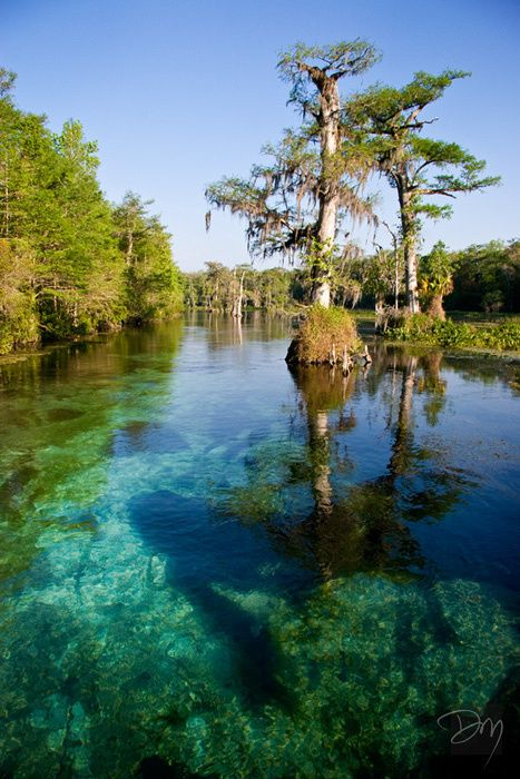 Wakulla River - State Park, FL - http://www.davidmoynahan.com/p492961497/h6139247f#h6139247f