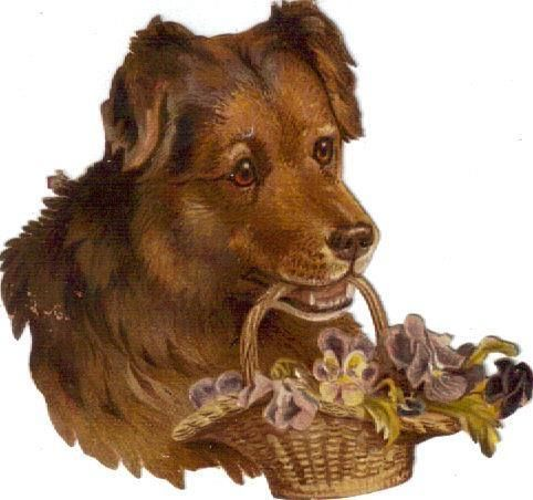 Victorian Die Cut Scrap Brown Dog carries Pansy Basket c1880