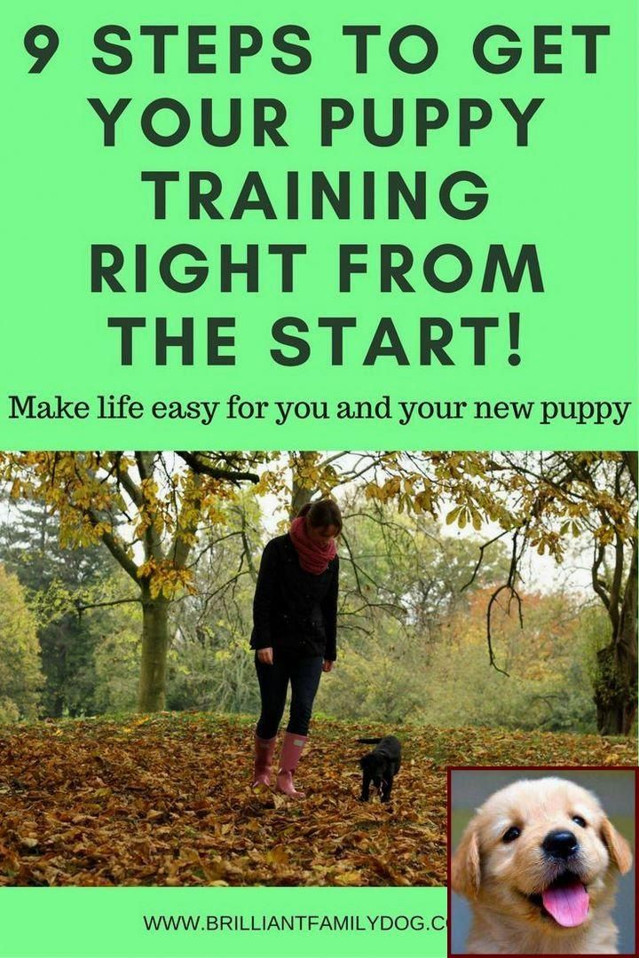If You Don T Know How To Train The Biting Routine Out Of Your Dog