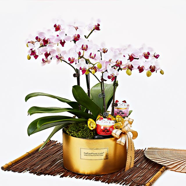 Pin By Crafted Identity On Chinese New Year Plant Flower Delivery Chinese New Year Gifts Beautiful Orchids