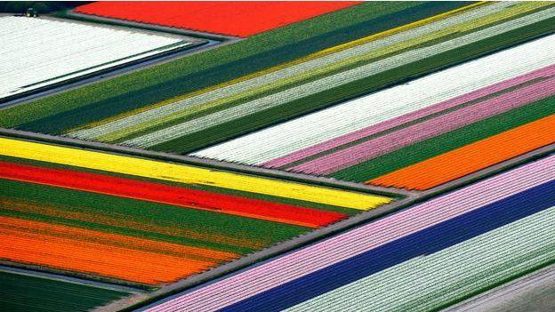 Campos de tulipanes desde las alturas #ColorPalette #colors