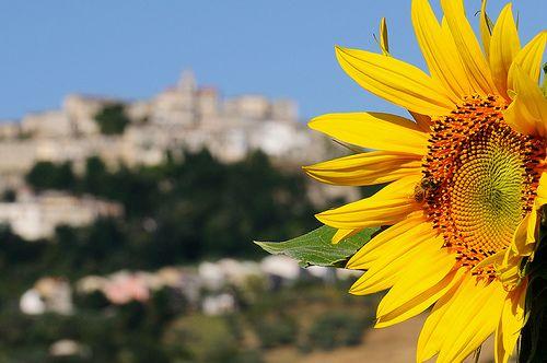 """Limosano è un comune italiano della provincia di Campobasso, in Molise. L'etimologia del nome è """"Limus - status"""", limo-fecondo. #limosano   #molise   #countryside   #relax   #italia   #holiday   #landscape   #view   #molisnt   #beatiful   #amazing   #food   #home   #italy"""