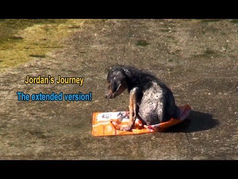 Jordan's JourneyThe extended version. - A homeless man cut off this baby's leg and tossed him down into the river.  - Special thanks to L.A on Cloud 9 for letting us know about Jordan: http://www.laoncloud9.org ~ https://www.youtube.com/watch?v=Zy97RgzxhJg Please donate to help continue to save these furkids! DONATE:http://www.hopeforpaws.org/donationrecurring I gave