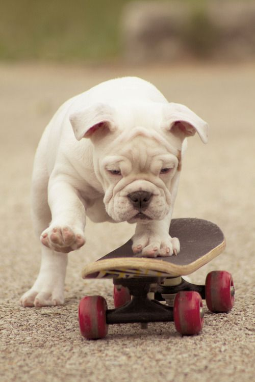 Brinquedinho novo! #skate #cachorro