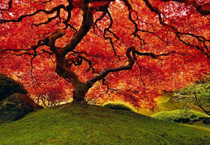 Tree of LifeLik Photography, Trees Of Life, Peter O'Tool, Peterlik, Peter Equal, Beautiful, Art, Japan Gardens, Tree Of Life