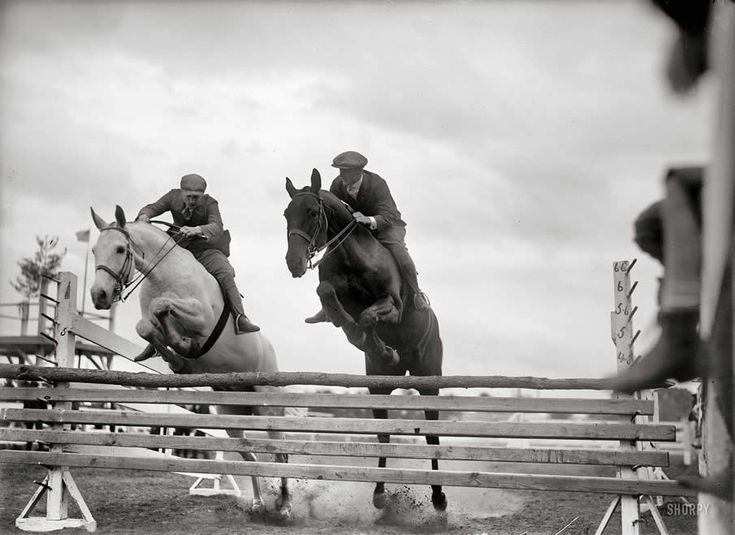 "Washington, D.C., or vicinity. ""Horse shows, miscellaneous, 1919. Unidentified jumpers."""