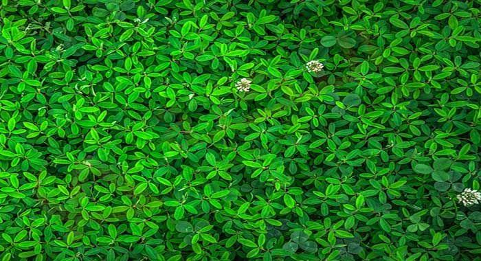 تفسير حلم رؤية اللون الأخضر في المنام معنى اللون الأخضر في الحلم للعزباء والمتزوجة والحامل والرجل رؤيا الده Global Warming Fertilizer For Plants Green Leaves