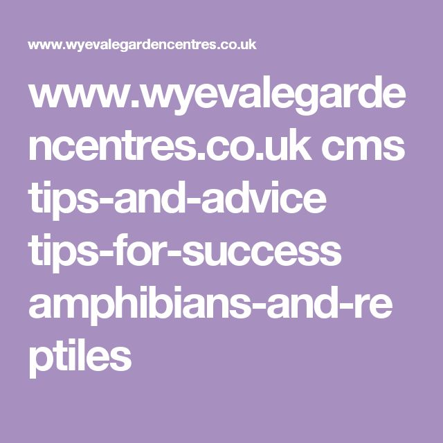 www.wyevalegardencentres.co.uk cms tips-and-advice tips-for-success amphibians-and-reptiles