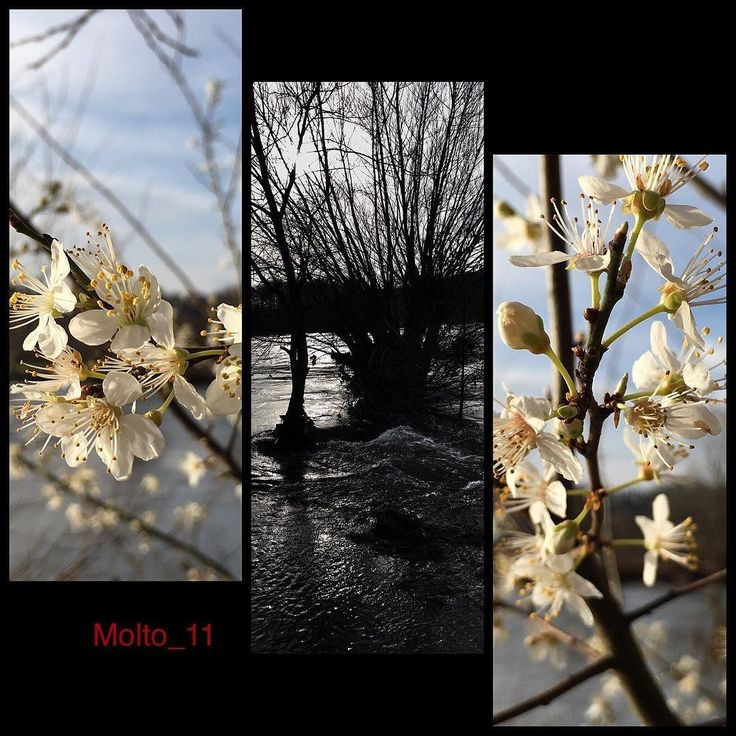"Ein Februar an der Ruhr #collage #iphone6sphotography #blüte #blütenzauber #unterwegs #hollygo #beautiful #river #Ruhr #Ruhrgebiet #love_ruhrgebiet #like4like #cool #nature #naturelovers #strauchblüte #strauch #tree #loves_united_trees #loves_united_nature by molto_11 Follow ""DIY iPhone 6/ 6S Cases/ Covers/ Sleeves"" board on @cutephonecases http://ift.tt/1OCqEuZ to see more ways to add text add #Photography #Photographer #Photo #Photos #Picture #Pictures #Camera #Only #Pic #Pics to #iPhone6S…"