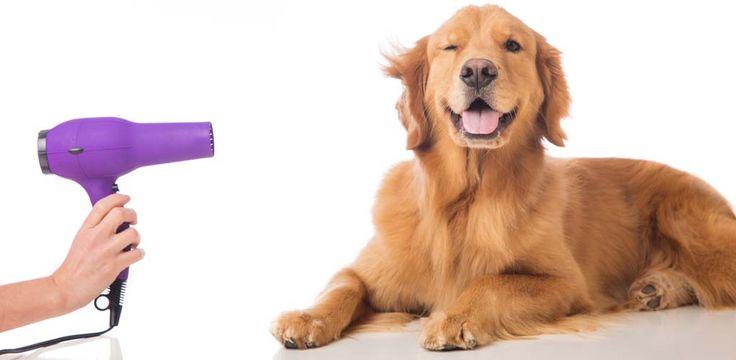 Oona S Dog Grooming