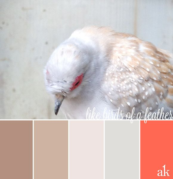 Best 25+ Taupe Color Palettes Ideas On Pinterest