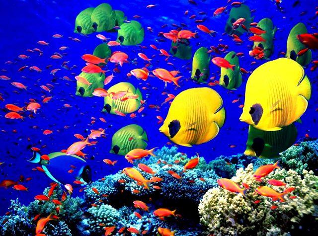 scuba diving in maldives - Google Search
