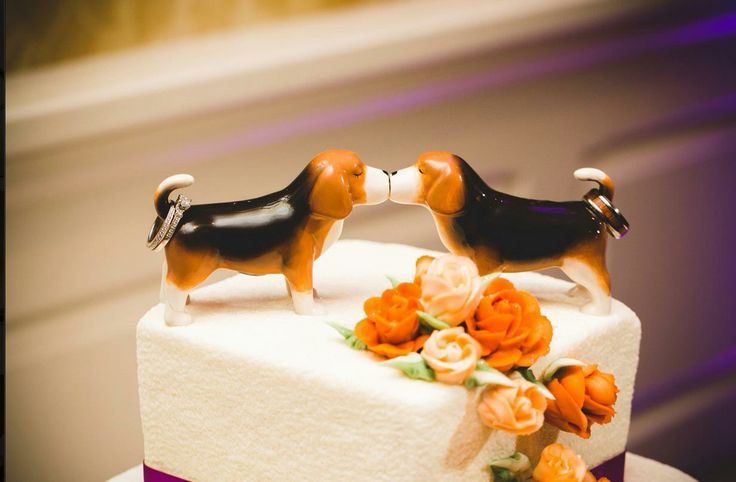 Beagle wedding cake toppers with wedding rings!