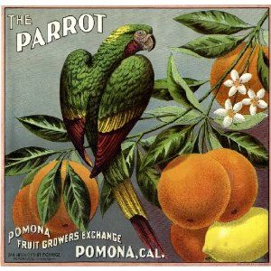 Parrot oranges, fruit crate label