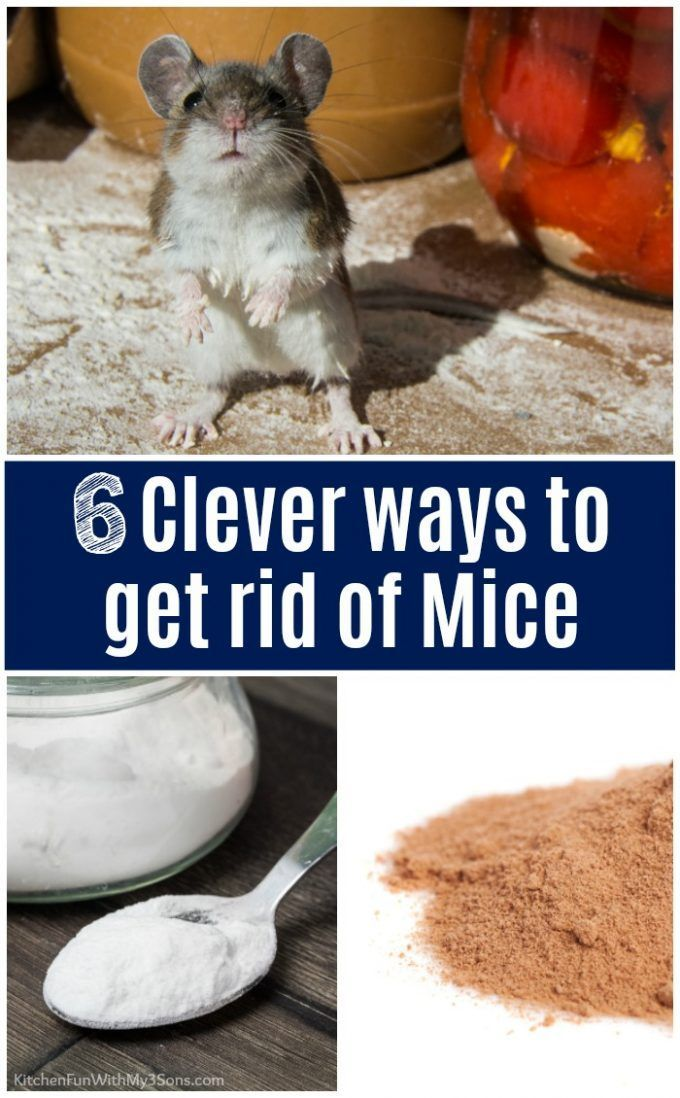 6 Clever Ways To Get Rid Of Mice That Actually Work Kitchen Fun With My 3 Sons Hacks Tips Tricks Getting Rid Of Mice Rodent Repellent Getting Rid Of Rats