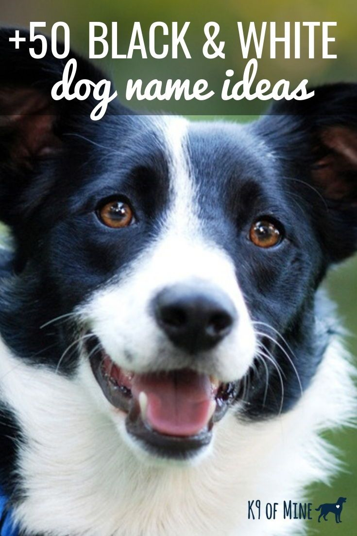 Find The Best Name For Your Black And White Pup Dogs Dognames