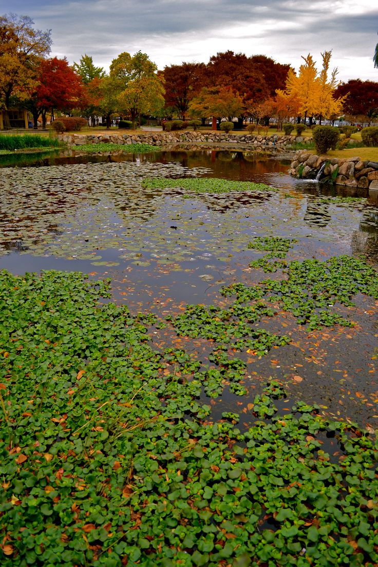 Gyeongju National Park   Gyeongju day trip in the fall