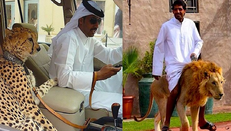 Домашние животные в Дубае: правила содержания и законы